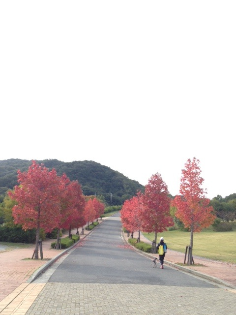 淡路島で散歩。イタグレBuono!