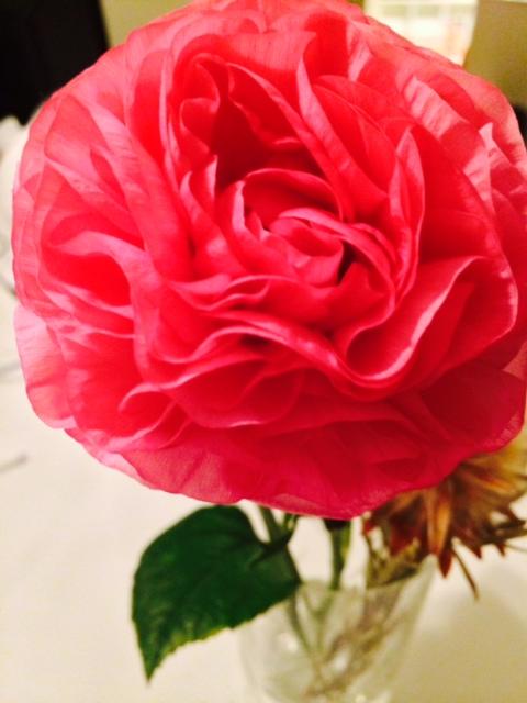 今日の花|鮮やかなピンクが印象的です。