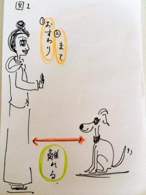 しつけ|おいでのトレーニング【犬の育て方 vol.9】