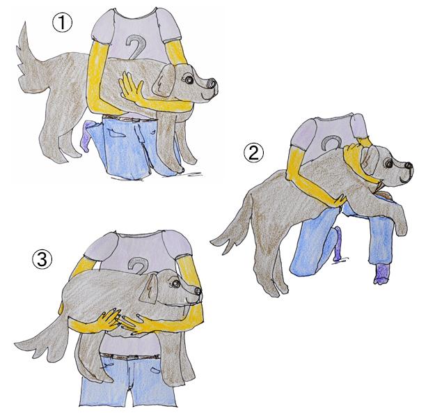 正しい犬の抱き方|犬の育て方