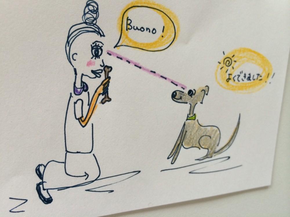 犬とのアイコンタクトはいろんな場面で使えます。可愛い写真も撮れますよ【犬の育て方 vol.38】