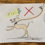 しつけ|お散歩・お出かけ【犬の育て方 vol.20】
