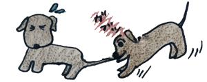 犬の成長その3|3週~13週は社会化期【犬の育て方 vol.42】