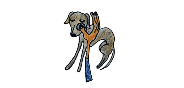 犬のグルーミング シャンプー・お風呂【犬の育て方 vol.52】