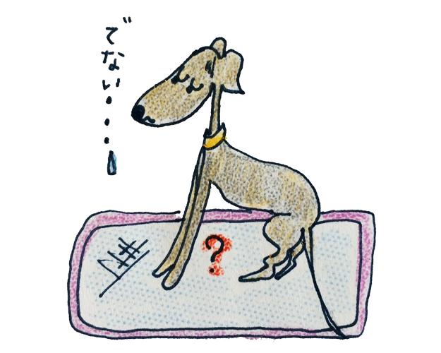 症状から解る犬の病気|オシッコの異常【犬のしつけ・犬の育て方 vol.61】