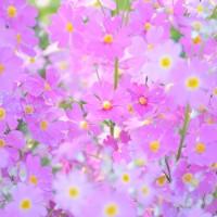 今日の花「近所の公園」 春の息吹を感じるイロトリドリの花