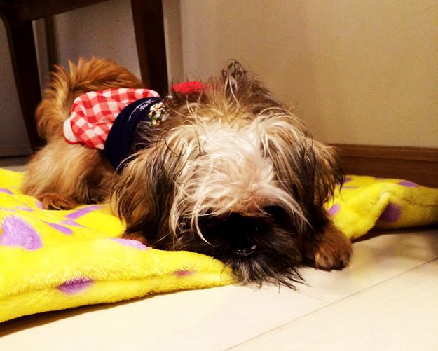 夏にピッタリ新色「アクア」販売開始です!カフェマットとしても使える犬の寝袋のご紹介