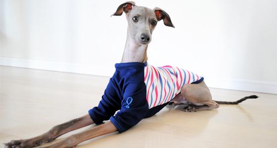 イタグレ・ウィペット用Tシャツ作ってみた!|ヨットブルー&ローズレッドボーダー