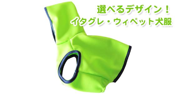 【新商品】パラキートグリーンが眩しいぜ!イタグレ・ウィペット犬服