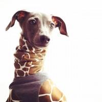 雑貨や食器、犬用品のお店|ARATA HOUSE