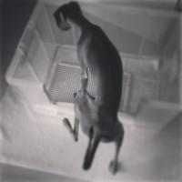 「犬の室内トイレ」って皆はどんな工夫をしてるんだろう?