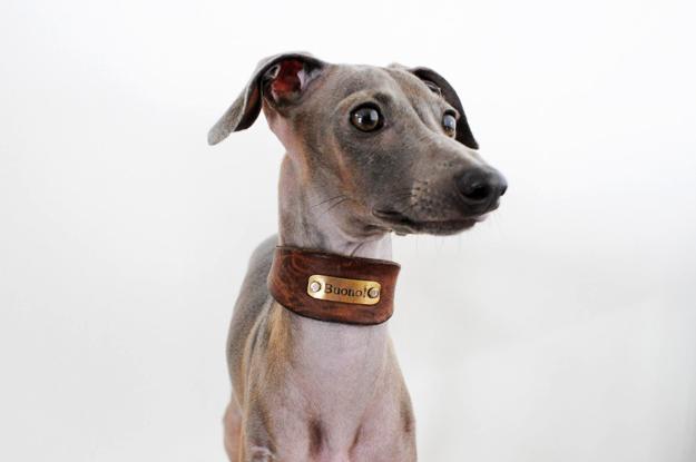 イタグレ用首輪を仙一犬具製作所さんで購入してから409日が経った