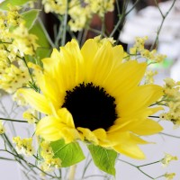 今日の花「向日葵」|暑いけど元気に爽やかにヒマワリのように。