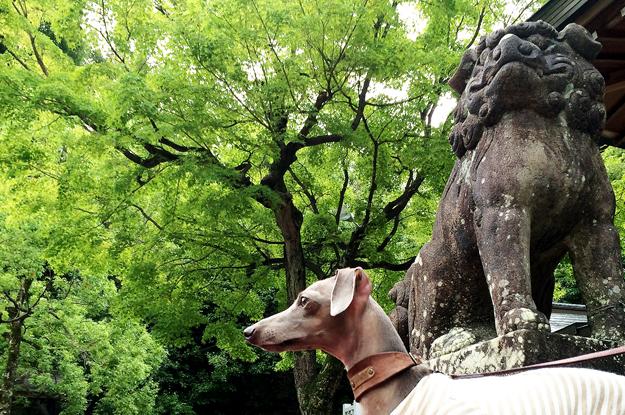 狛犬と迷子札と私。