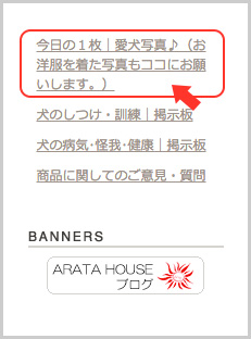 着画を投稿して下さい〜♪ ARARTA HOUSE掲示板スタート