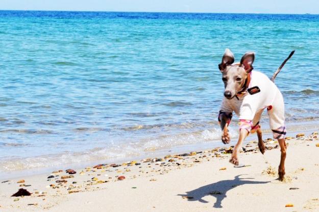 淡路島!(あわじ.com)|淡路島の愛犬と楽しめる場所