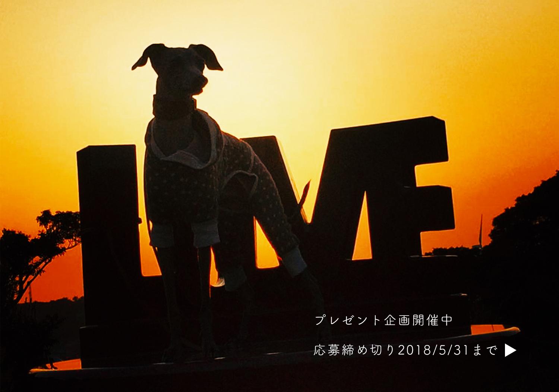 Instagram限定『愛犬とLOVE(愛)とaratahouse』プレゼント企画 第2弾