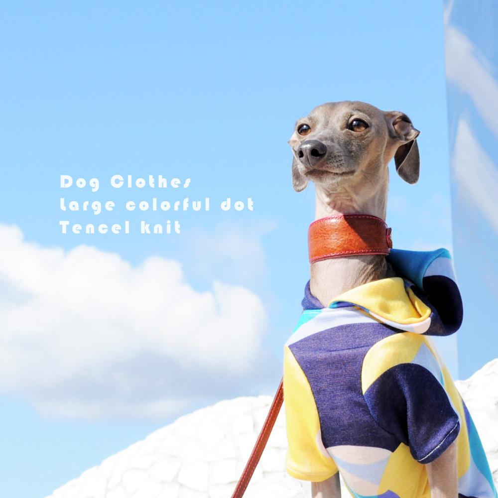 イタグレ・ウィペット犬服|大きなカラフルドットのテンセルニット|選べる3タイプ×3カラー
