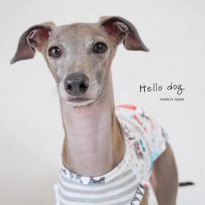 犬服|Hello dog|ダブルガーゼ×杢天竺ボーダーニット|選べる3タイプ