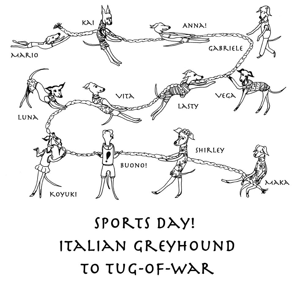 Sports day! Italian Greyhound to tug-of-war