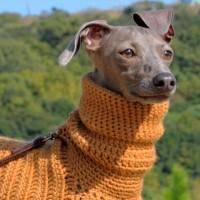 寒い冬にほっかほっかイタグレ用ポンチョ「Mother of Yotchan」母の手でウール100%の毛糸を編んだ手作りのPonchoです。