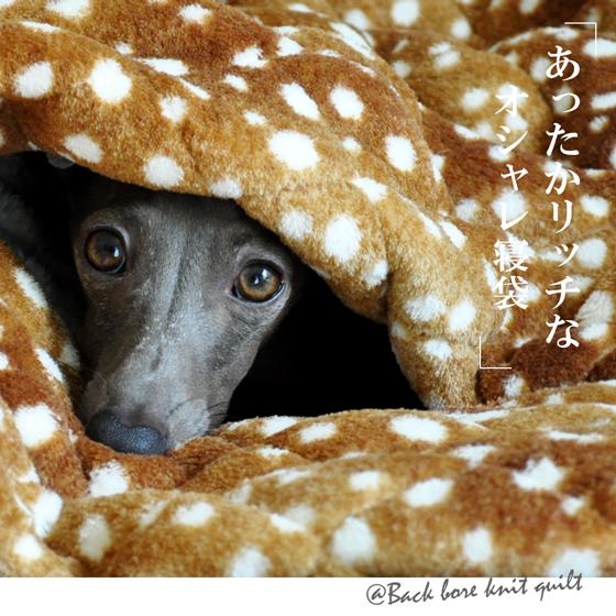 「犬寝袋でぬくぬくねんね」あったかリッチなオシャレ寝袋