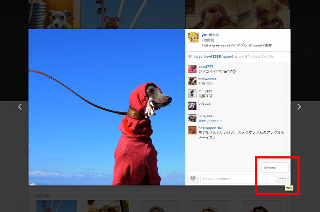 2014年12月に撮った写真の人気ベスト5を調べてみた!by Instagram|インスタの写真をブログに掲載する方法