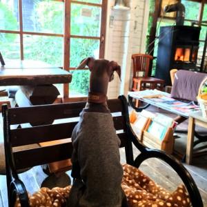 「淡路島カフェ」ラウーベの薪ストーブでホッカホッか|犬も一緒に入店できます