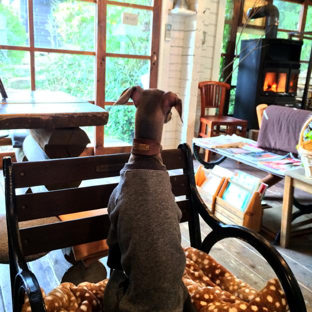 「淡路島カフェ」ラウーベの薪ストーブでホッカホッか 犬も一緒に入店できます