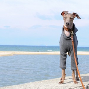 一番シンプルな犬服。飾らない、気取らない。だから可愛い愛犬の表情、仕草が生きる。