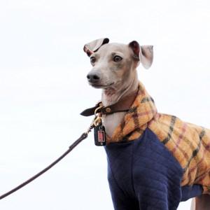 イタグレ服の新作できました!ふわっとツィードチェックは英国羊毛を使用した上品なお洋服です