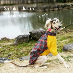 """「お客様からのメッセージ」いつも笑顔が""""Cute""""なサルーキのジュリアちゃんと、お心遣いが嬉しかった話"""