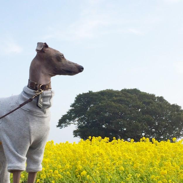 靄に包まれた淡路島の朝。こんな日はゆっくりお洋服「犬服」のお話をしましょう。