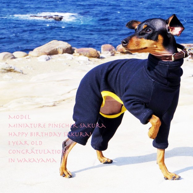 犬服|ロンパース|毛布に包まれたような暖かさと、優しい肌さわりのボンバーヒート(保温)裏起毛2WAYニット|選べる3カラー