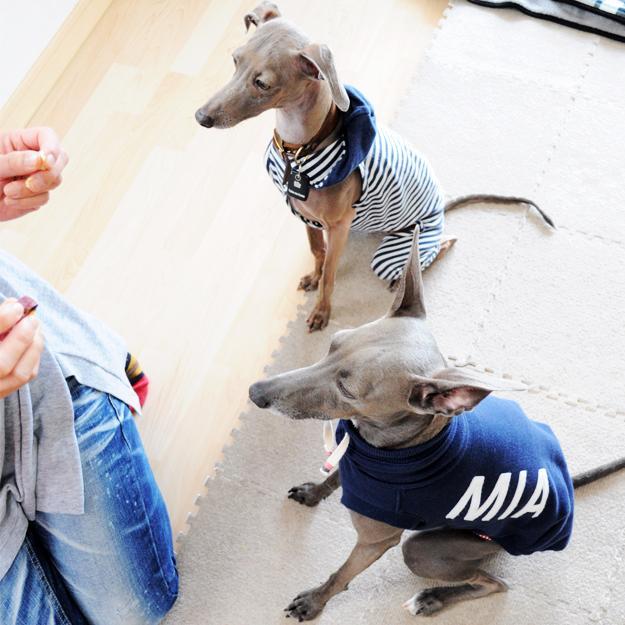 「愛犬を想う」それは家族に笑顔と、優しさを運んでくれるのかも知れない。淡路島で知ったMIAに込めた想いの話。