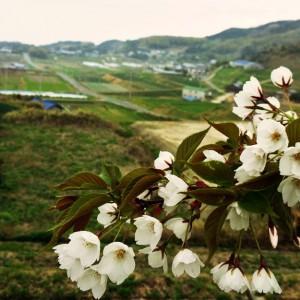4月1日に感じたこと。「この町の匂い」