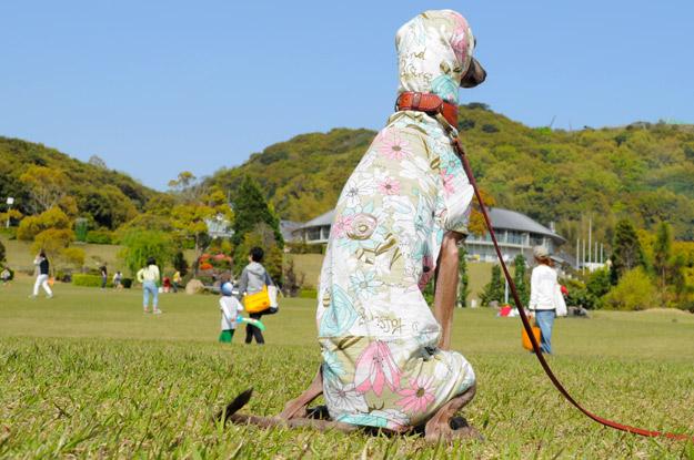 春だし明るく元気にいこうよ!そんな気持ちでデザインした犬服「Flower Garden」の撮影裏話