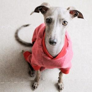 「犬服」年中着れるトレーナーを選べる3タイプ×3カラーにリニューアルしました!