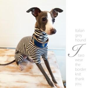 よっちゃん、嬉し泣き!ARARTA HOUSEの「犬服」を着たイタグレ伊太郎くんがテレビに出演した日の話