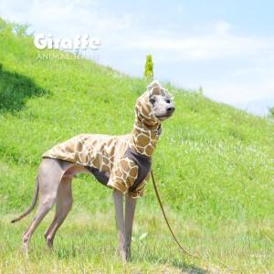 お待たせしました!リクエストから何ヶ月かかったんだろう?遂に完成したアニマル柄の犬服「キリン」「ゼブラ」「ウシ」
