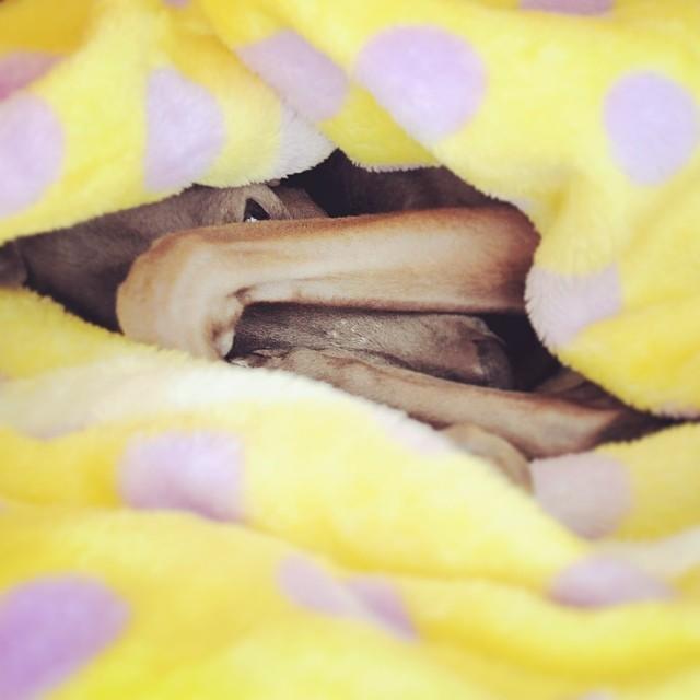 365日どこでも寝袋大好き!「犬用の寝袋&カフェマット」