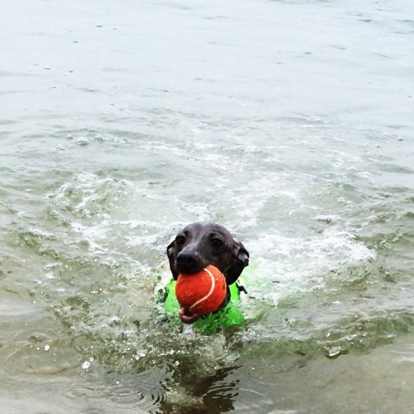 全犬種対象「イラストモデル募集」皆さんの愛犬が「ゆるく可愛らしいイラスト」に!SUMMER SEA@2015 〜犬達の夏休み〜 &プレゼント企画