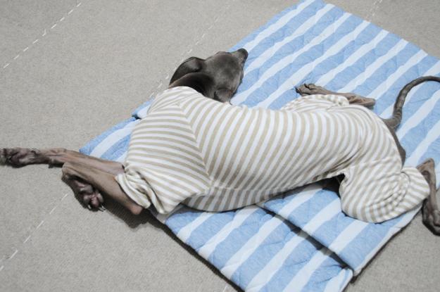 「夏用|犬寝袋&カフェマット」暑い日も快適に、ひんやり涼しい肌触り。