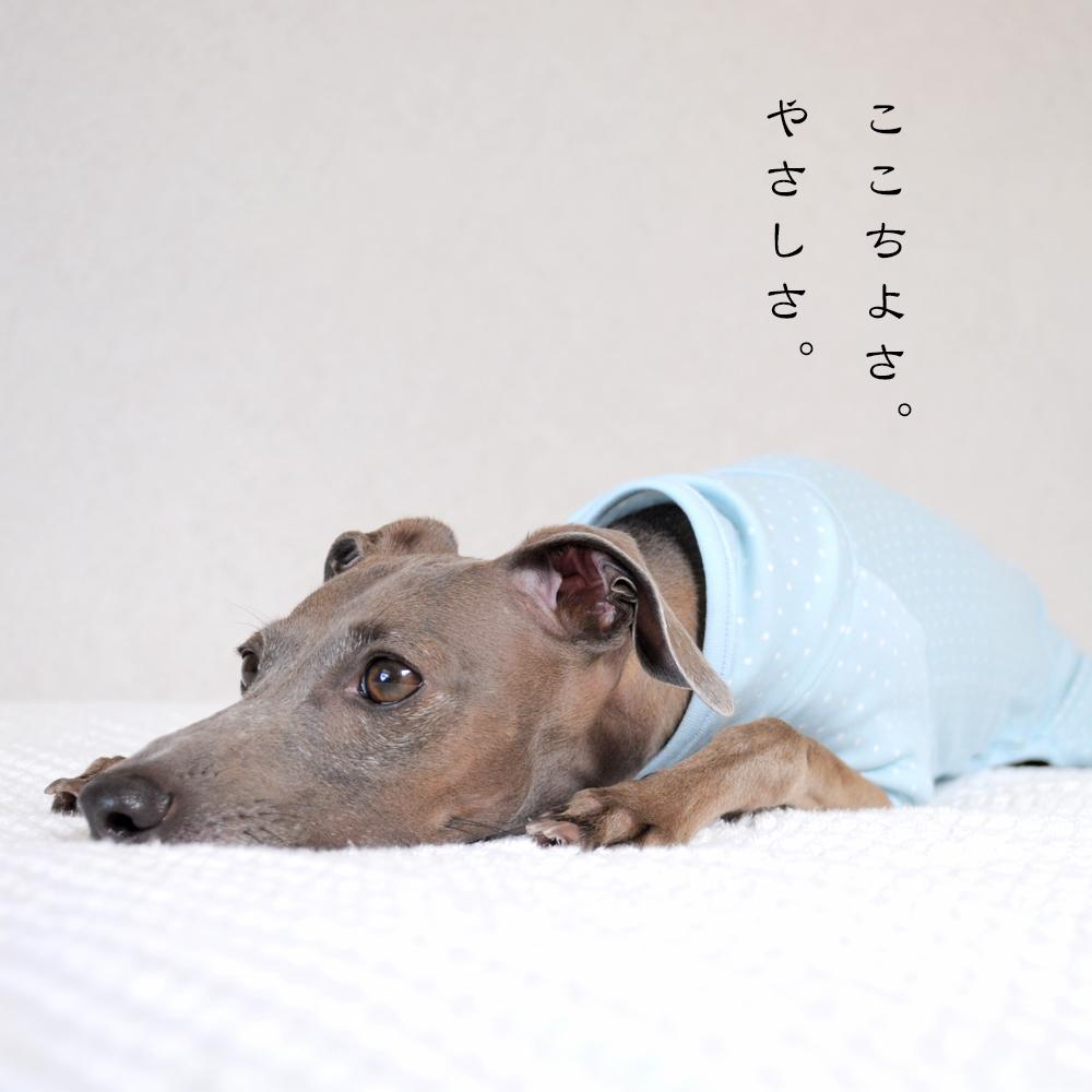 淡路島で夕焼けを見ながらランニング中に、ふと想ったこと。犬にとって服はどんな意味があるんだろう?