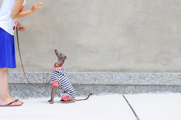 「秋の新作犬服」柔らかな縞模様と小さな物入れのお洋服|「小さな物入れに、なに入れようかなぁ〜♪」