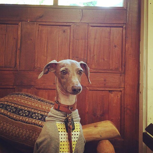 新作の犬服を撮影する日は、私達もBuono!も嬉しい日。