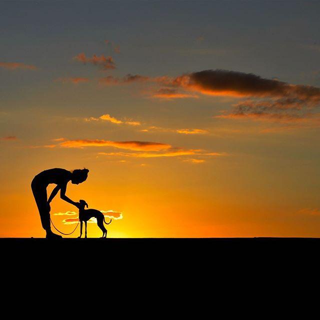 ブログ最新記事「ニュース|ブログ|おすすめ商品|お客様からのメッセージ|犬のしつけ|育て方|愛犬との暮らし|淡路島|食べ歩き・グルメ|名勝・観光スポット|ARATA食堂|旅|店主のひとり言|写真ギャラリー|メールマガジン|WEB制作」