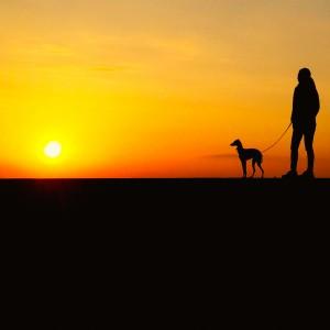 夕陽に照らされて。よっちゃんとイタグレBuono!のひととき。