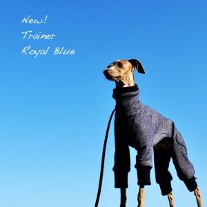 「イタグレ秋服」優しさの中にも、強さが溢れるトレーナーRoyal Blue「2015.秋冬新作」