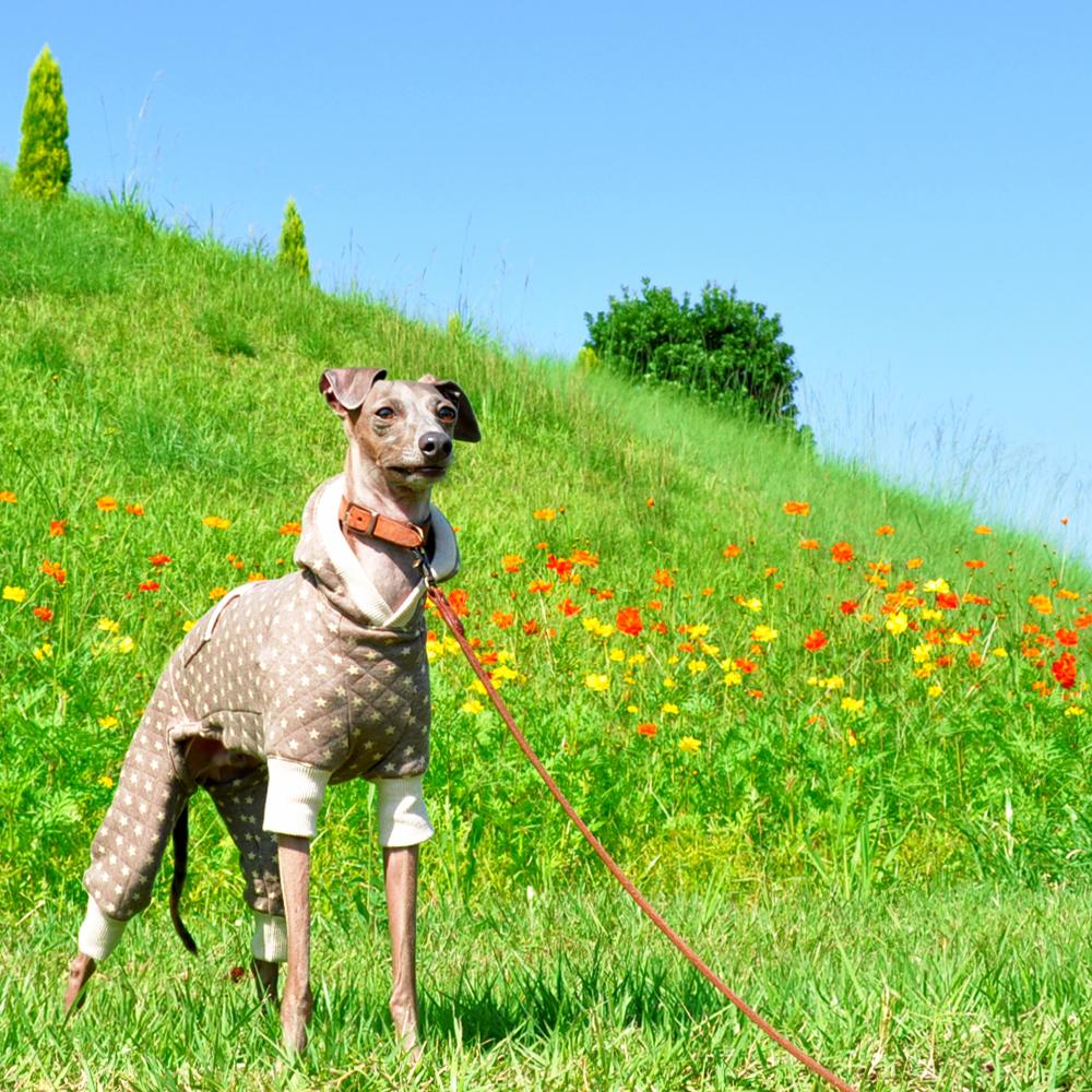 カンガルーポケット付きの新作犬服出来たけど・・販売は延期。。それでもBuono!は嬉しそう♪